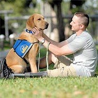 Dogs and Veterans Day